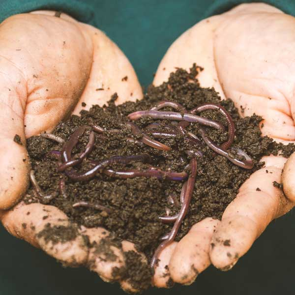 compost, hands holding compost, worms