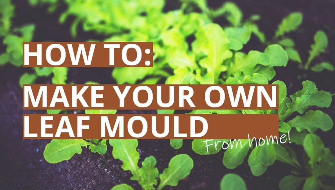 How to make leaf mould, green leaves, leafmold, how to guide