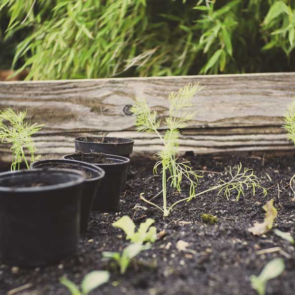 how to use compost, potted plants, garden, soil