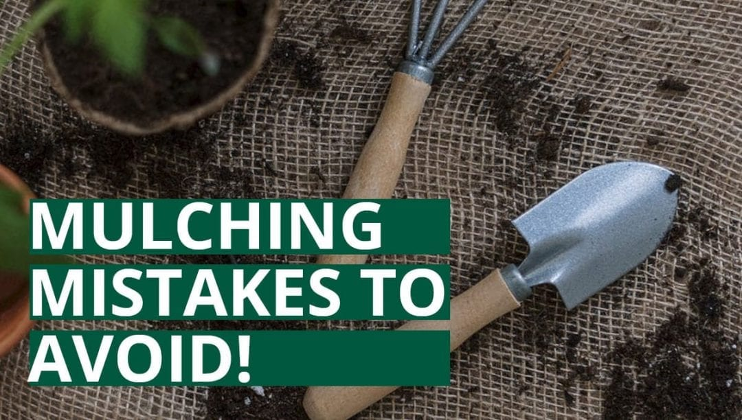 common mulching mistakes to avoid