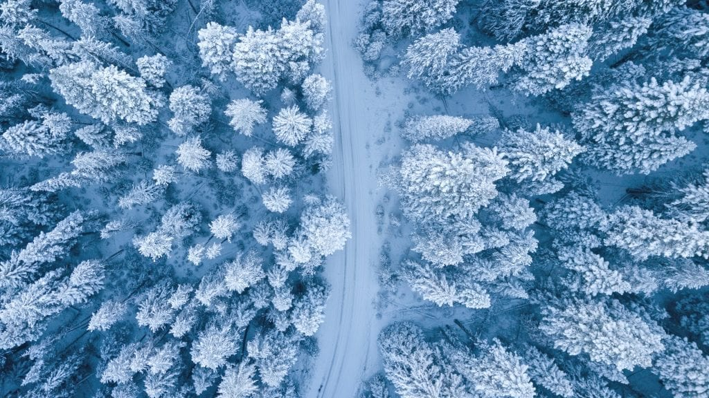 Winter, forest, forestry, trees, snow, cold, heating
