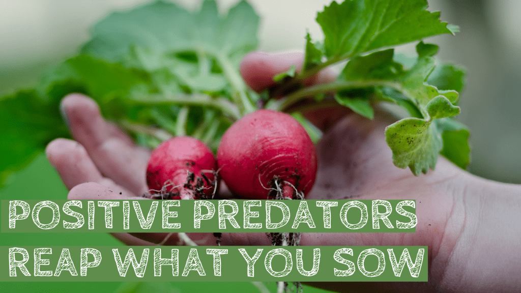 predators, plants, organic, organic garden