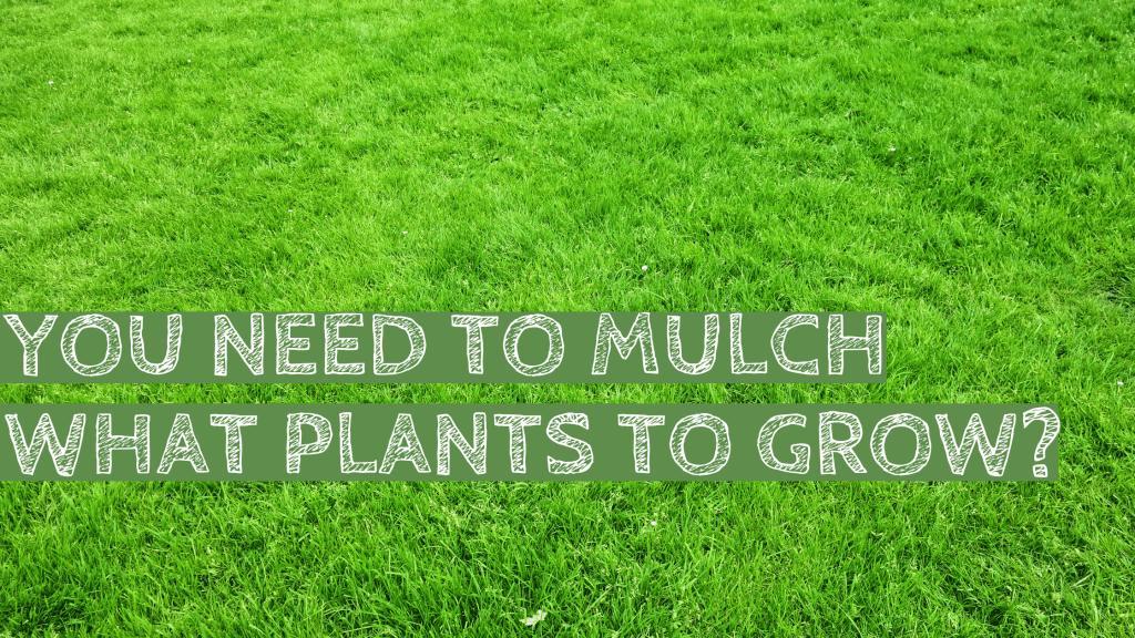 Mulch, plants, grass, green, organic, organic garden
